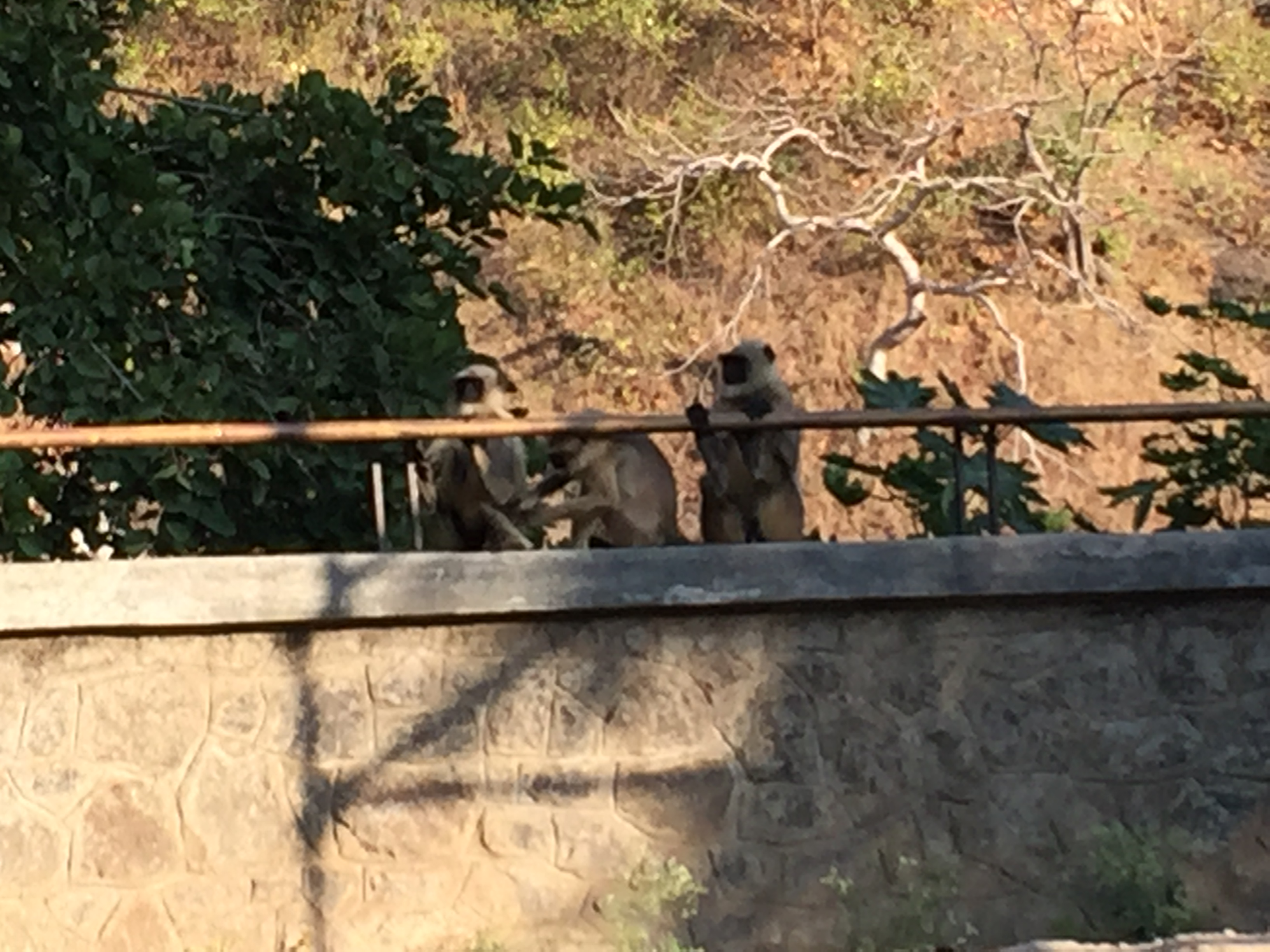 Monkeys hanging out
